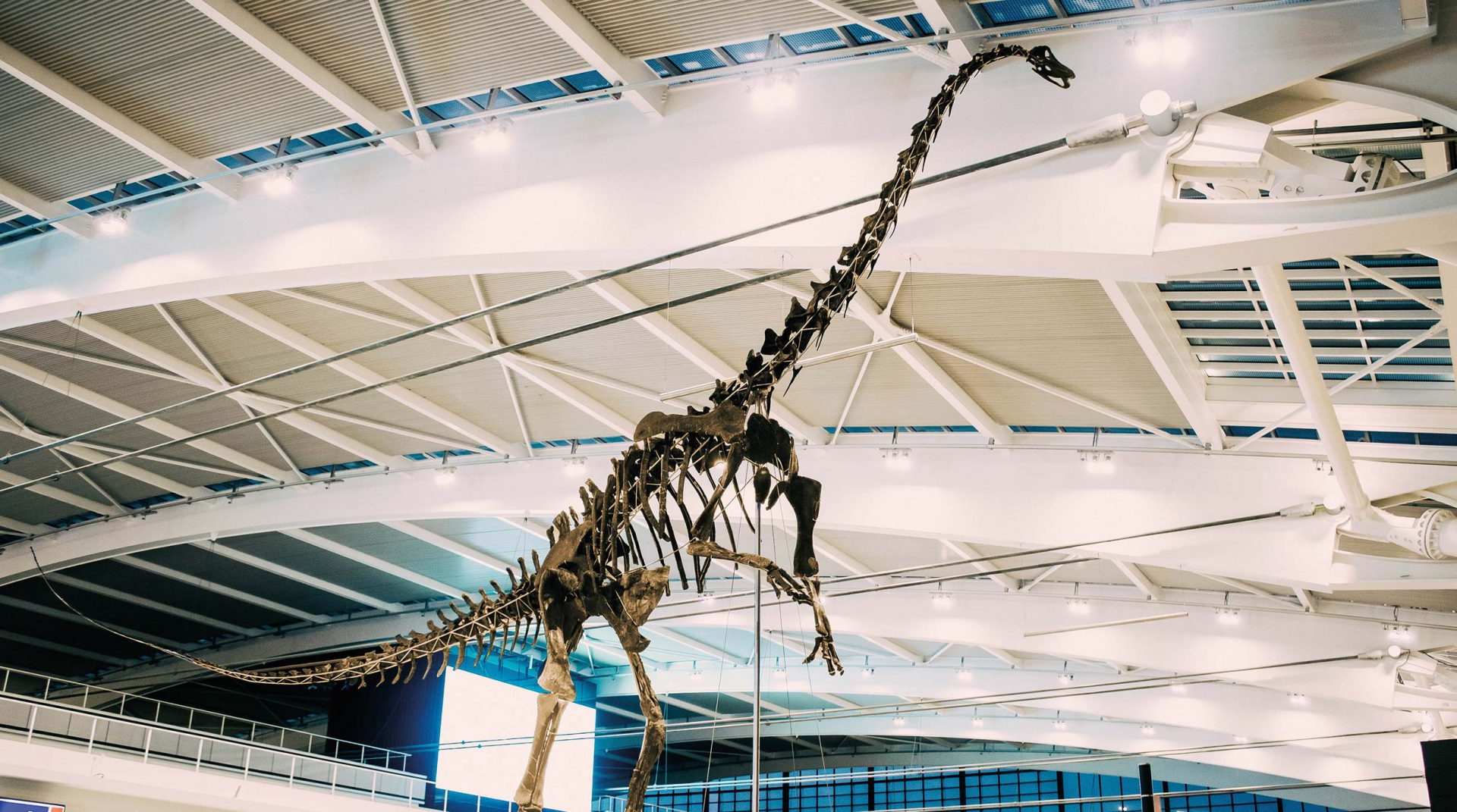 Skinny the Diplodocus at Heathrow Terminal 5