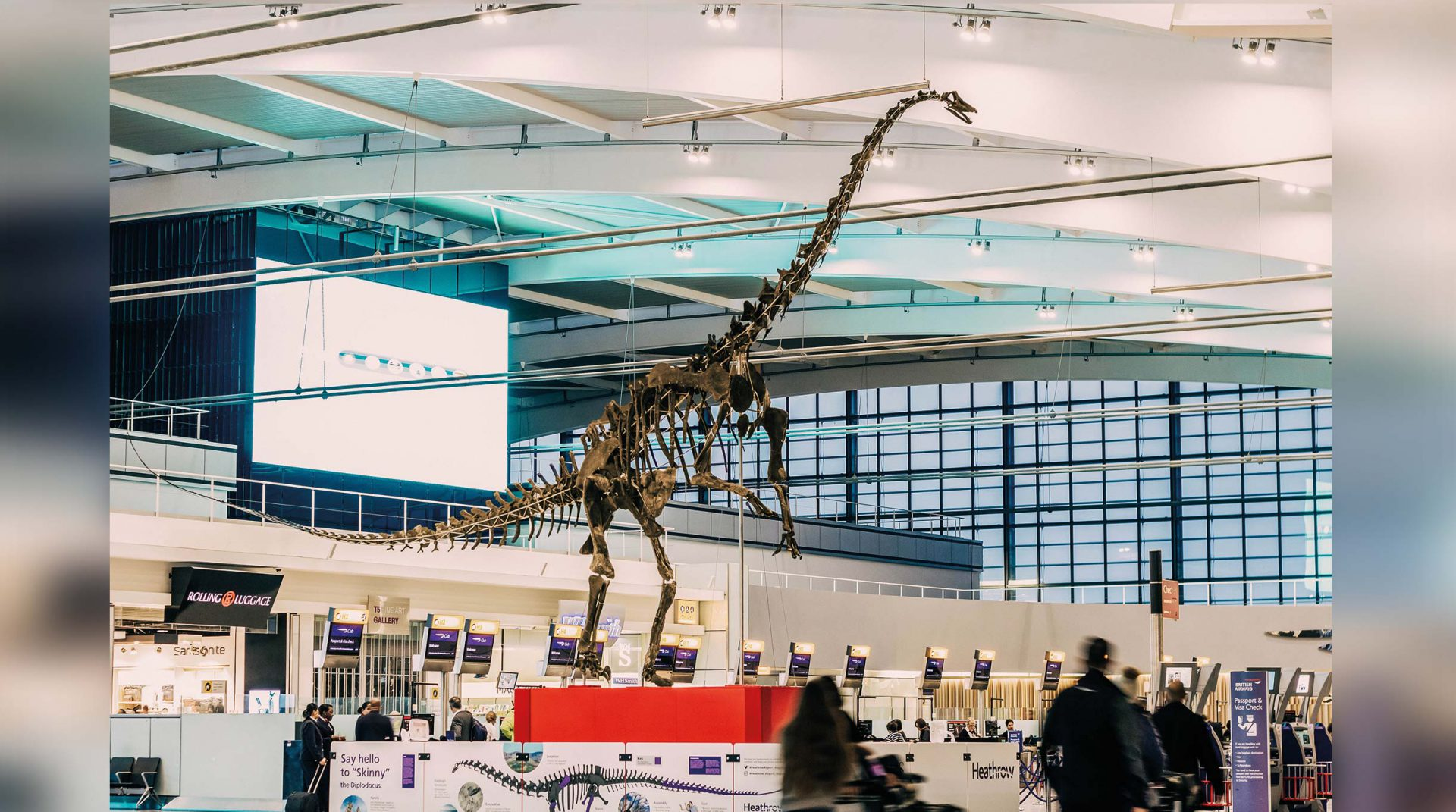 Skinny Diplodocus at Heathrow Terminal 5
